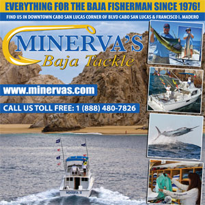 Minerva's Baja Tackle and Fishing Charters, Cabo San Lucas