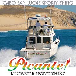 Marlin fishing in cabo san lucas tips for catching black for Cabo san lucas fishing season