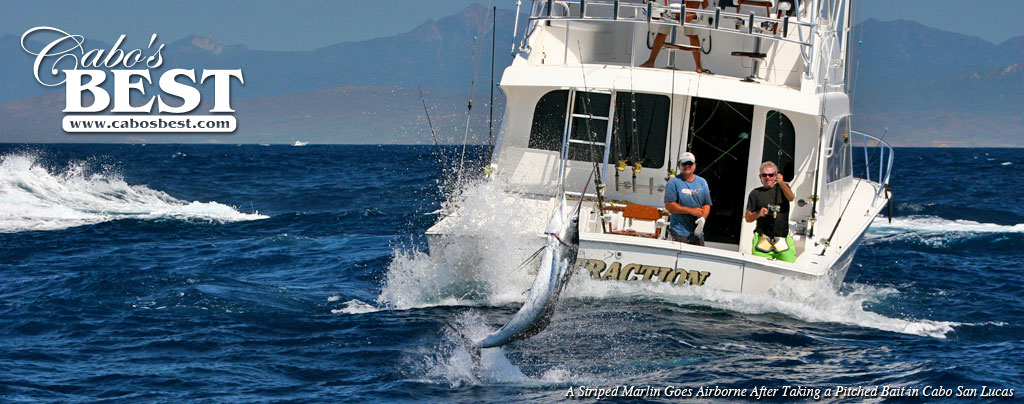 Marlin Fishing in Cabo San Lucas