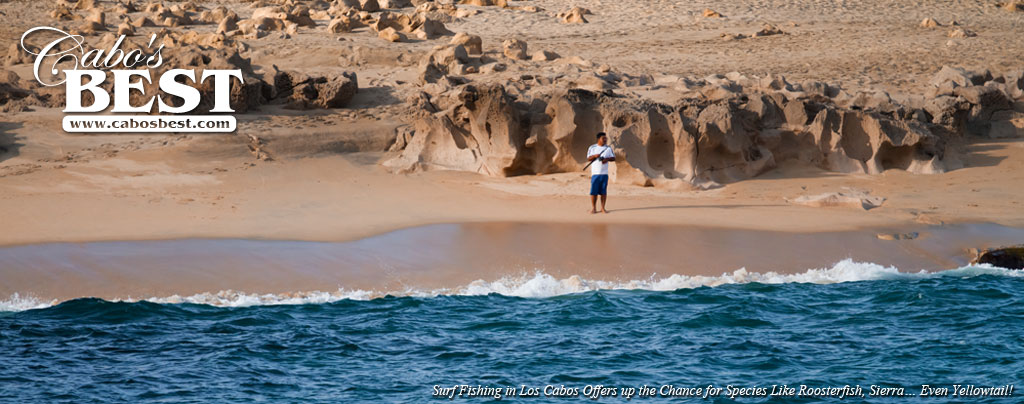 Cabo surf fishing information and resources for surf for Los cabos fishing
