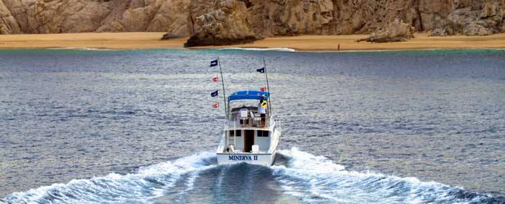 Cabo charter sport fishing